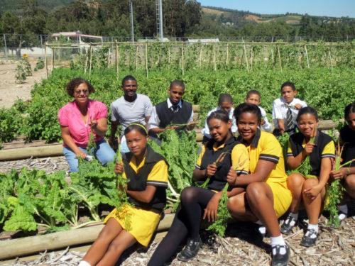 Organic Food Garden